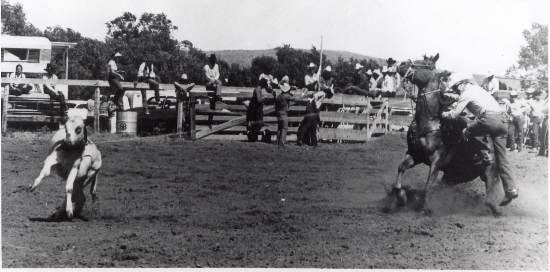 Sabre 2 at Arthur NE rodeo.  He was a TAAA Stakes Winner.  Was Grand Champion at halter and won points in calf roping, steer roping and western riding.  Was high point Calf Roping Horse in NE.  Sired many outstanding horses for us.
